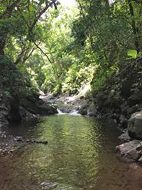 El Rodeo Fluss kleiner Waldweg