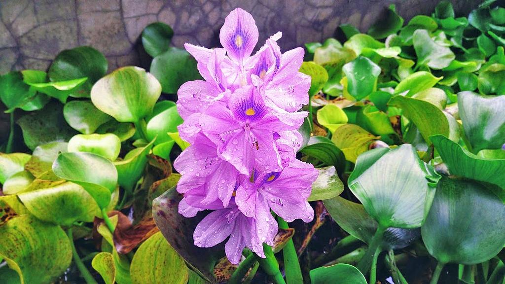 Pibi Boreal Blumen im Garten