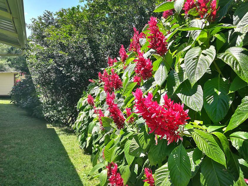 Pibi Boreal Garten