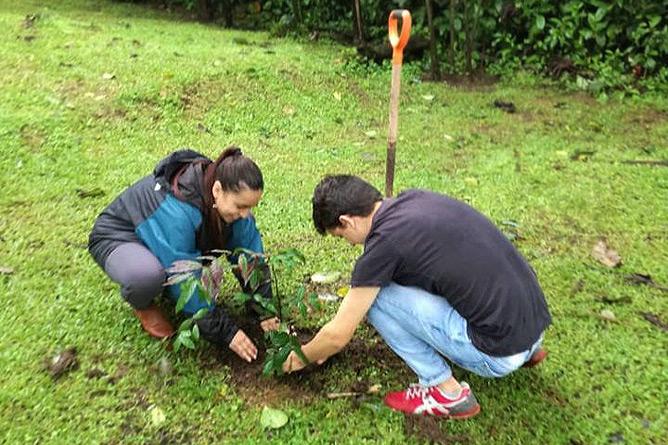 Sonati Baumsetzen Jugendliche