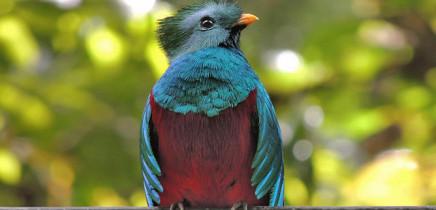 Suria-Lodge_Birding-Costa-Rica-Vogelbeobachtung-Quetzal-Tour