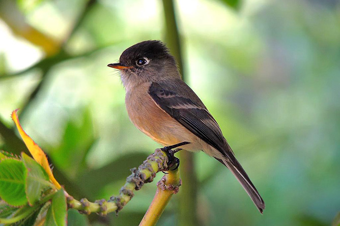 Suria Lodge Vogelbeobachtung
