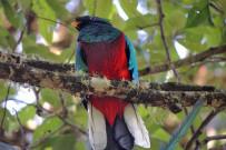 Suria-Lodge_Vogelbeobachtung-Quetzal-Tour-2_Foto-Suria-11-2018