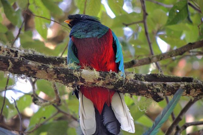 Suria Lodge Vogelbeobachtung Quetzal-Tour