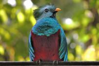 Suria-Lodge_Vogelbeobachtung-Quetzal-Tour-3_Foto-Suria-11-2018