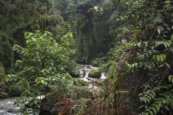 Suria Lodge Wanderung Wälder