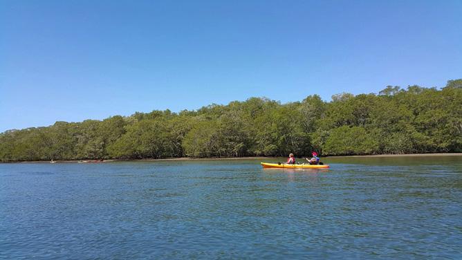 Yellowfin Kajak Mangroven Mündungsgebiet