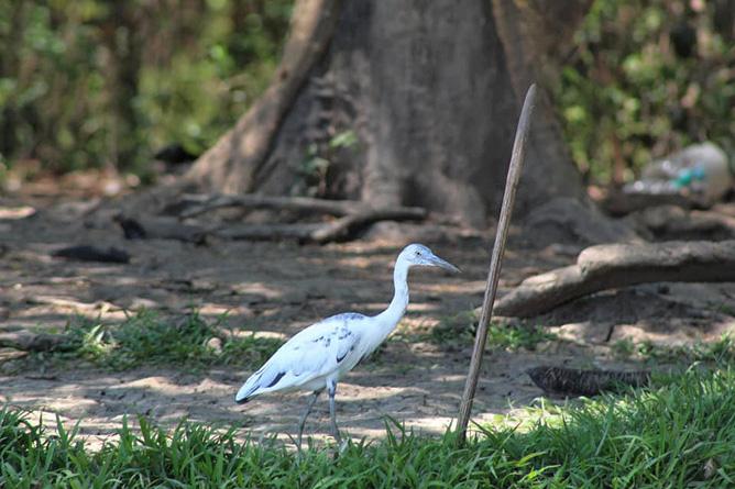 Yellowfin Kajak Mangroven Wasservogel