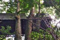 Almendro Baum neben dem Baumhaus in Maquenque Lodge_Foto Christine 09-2018