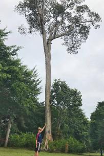 Großer Soldaten Ara_Almendro-Baum_Foto Micha 12-2018
