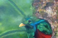 Heidy Jaen Porras_Quetzal Vogel Gemälde - verkauft - _Foto Jaen 19-12-2018