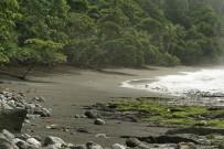 Osa Wild Nationalpark-Corcovado Sirena Trail nach Carate