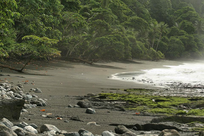 Osa Wild Nationalpark-Corcovado Sirena Trail nach Carate