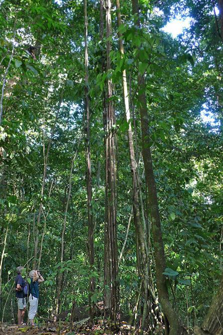 Osa Wild Nationalpark-Corcovado Sirena Naturwanderwege