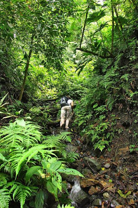 Osa Wild Nationalpark-Corcovado Wanderung