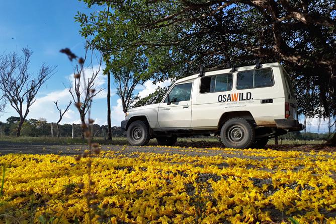 Osa Wild Toyota Landcruiser 4x4