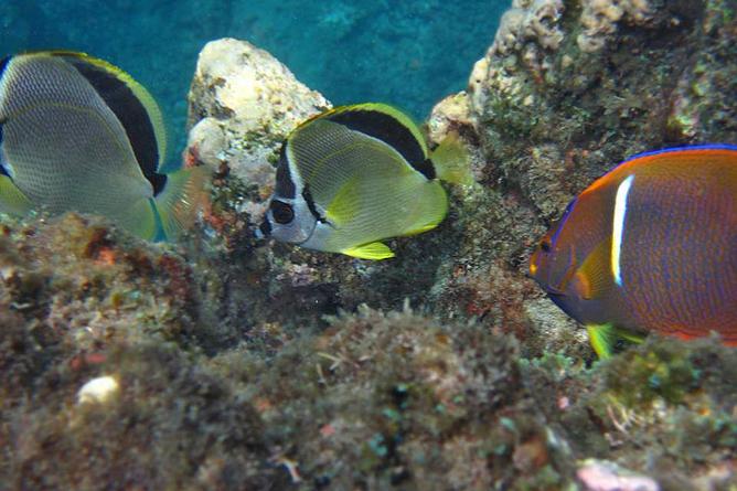 Bahia Aventuras Costa Rica Schnorcheln