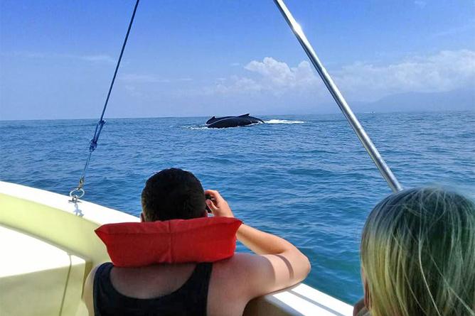 Bahia Aventuras Costa Rica – Touren zur Beobachtung von Walen und Delfinen