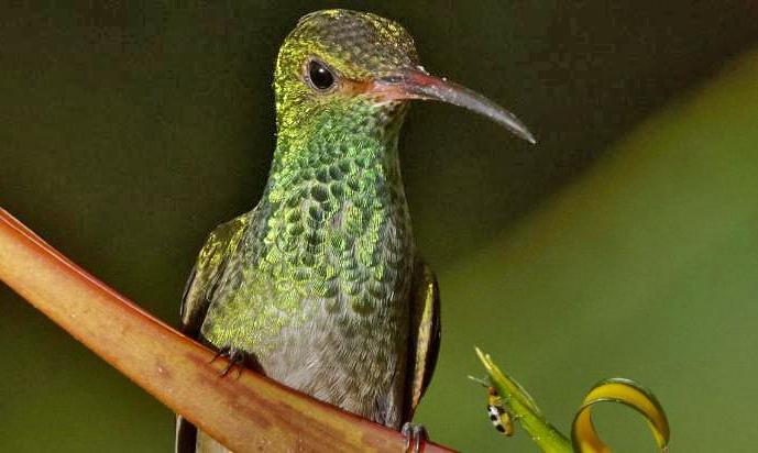 Casa Botania Birding Tour Kolibri