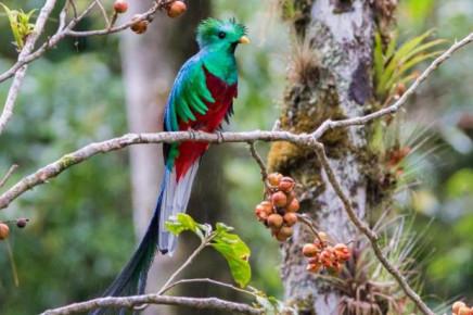 Casa Botania Birding Tour Quetzal