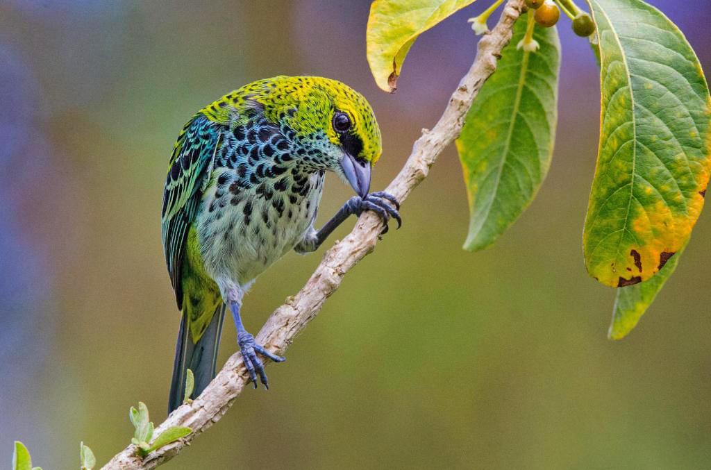 Casa Botania Birding Tour