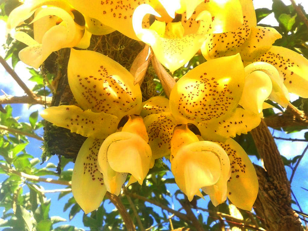 Casa Botania Orchideen