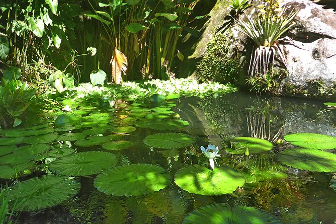 Jardin Secreto • San Gerardo de Rivas Bromeliengarten Costa Rica 03
