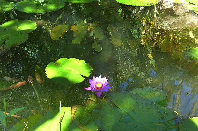 Jardin Secreto • San Gerardo de Rivas Bromeliengarten Costa Rica 04