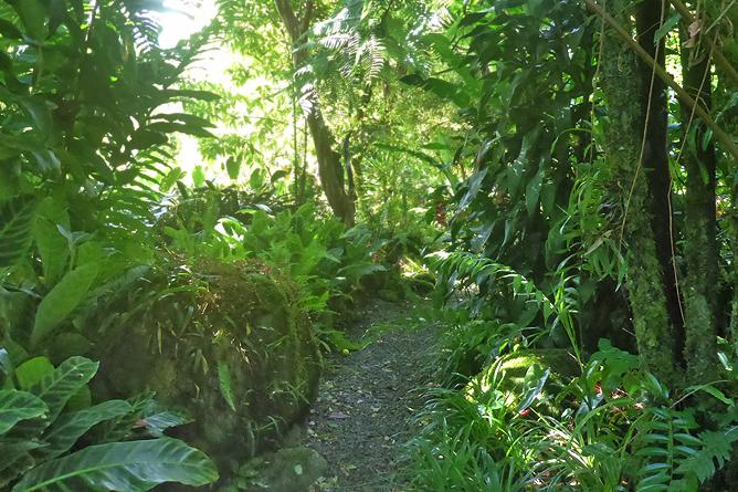 Jardin Secreto • San Gerardo de Rivas Bromeliengarten Costa Rica 07