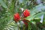 Jardin Secreto • San Gerardo de Rivas Bromeliengarten Costa Rica 12