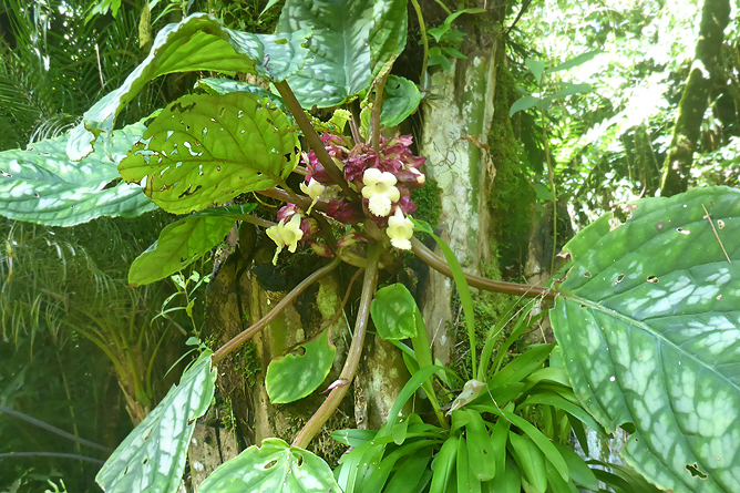Jardin Secreto • San Gerardo de Rivas Bromeliengarten Costa Rica 20