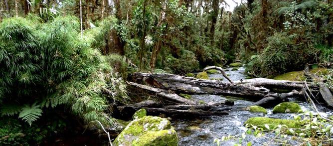 La Amistad Nationalpark Flüsse