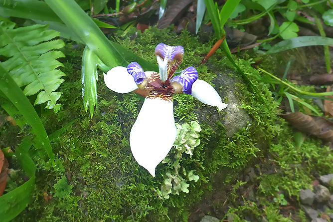 Orchideengarten_San Gerado de Rivas_3_Foto Uli_5-2018