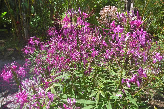 Orchideengarten San Gerado de Rivas