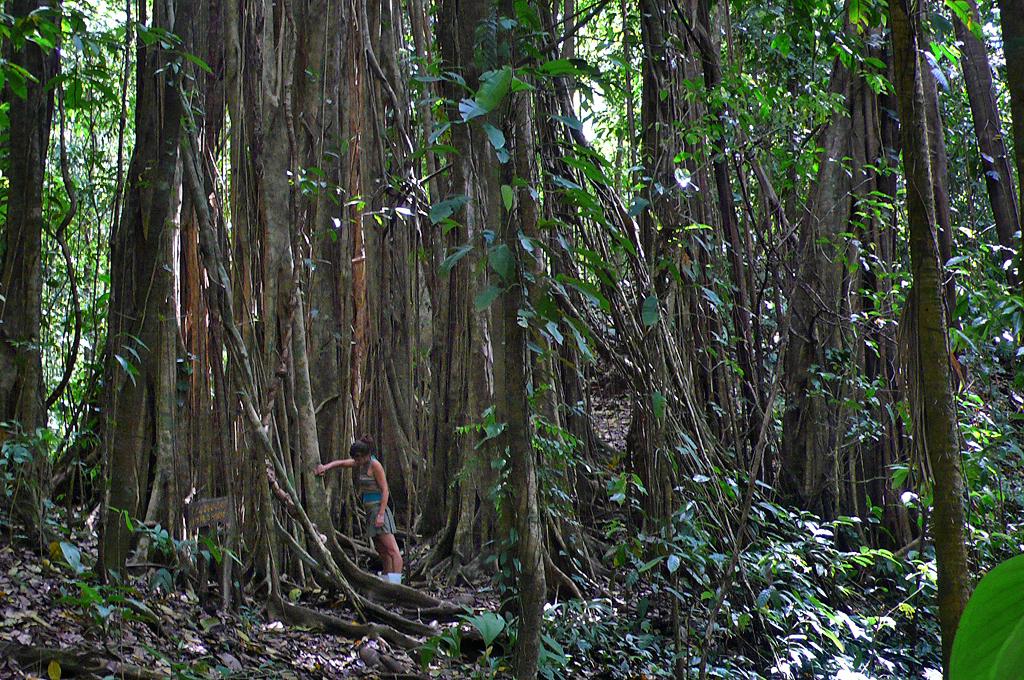 Osa Wild Trekking La Tarde Urwaldriesen