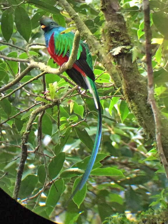 Aguti Reservat – Quetzal Vogel