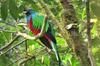 Aguti Reservat - Quetzal Vogel Monteverde Costa Rica