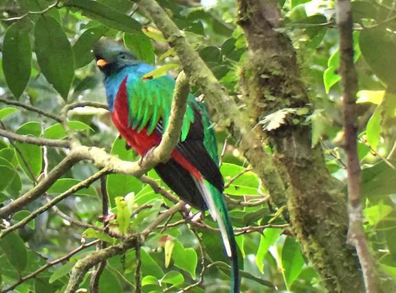 Aguti Reservat – Quetzal Vogel Monteverde Costa Rica