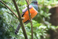 Aguti Reservat - Vogel