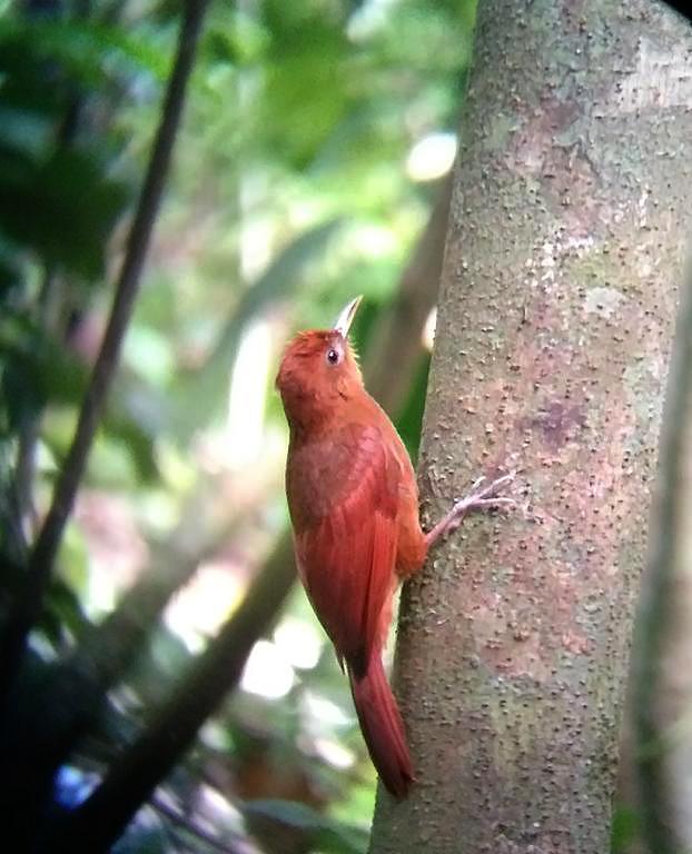 Aguti Reservat –  Vogelbeobachtung