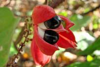 Posada Cerro Escondido - Flora
