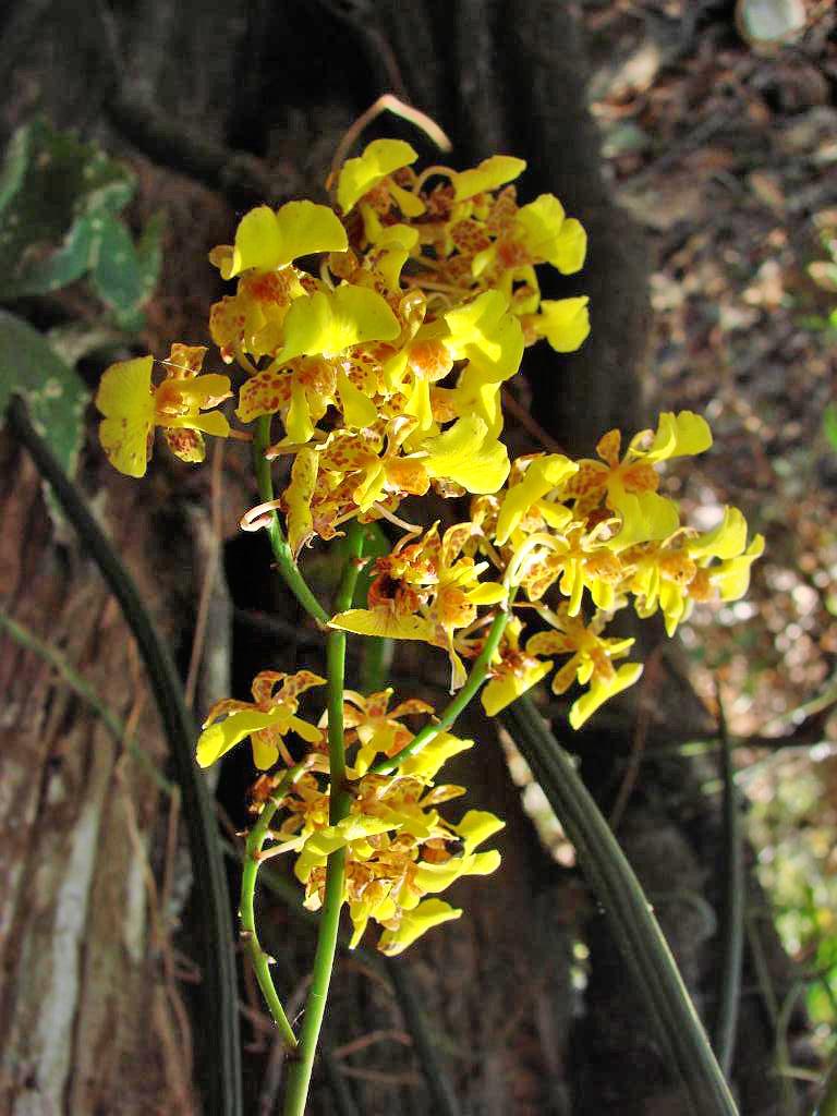 Posada Cerro Escondido – Ochideen