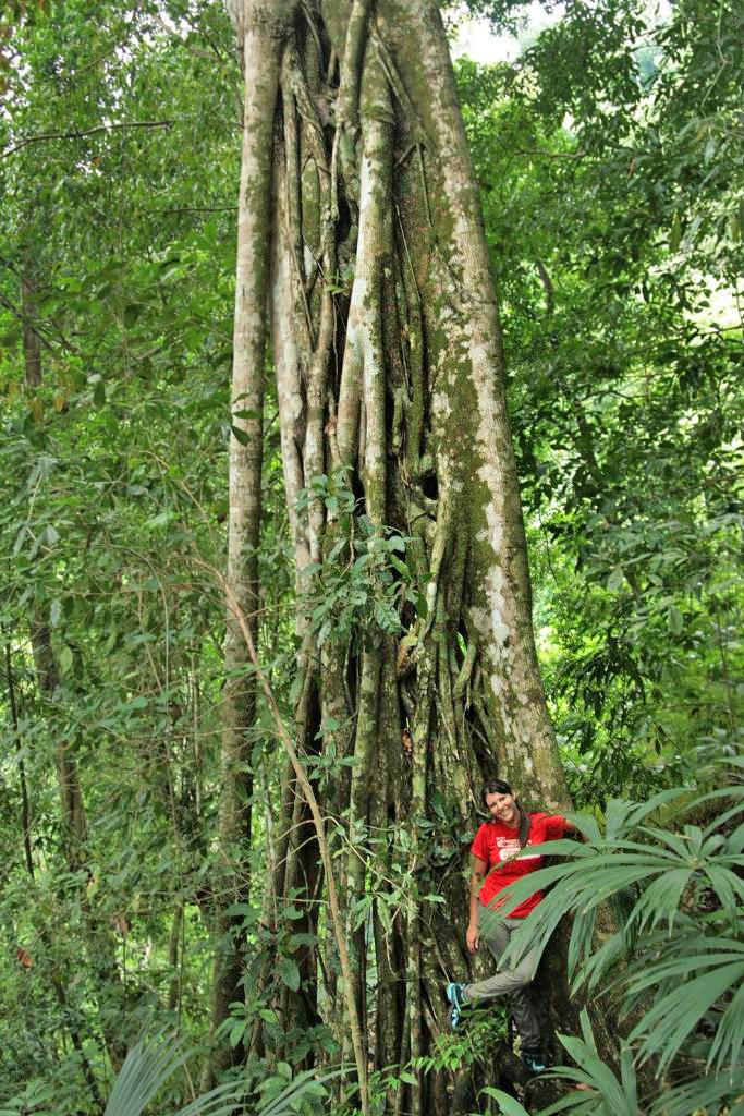 Posada Cerro Escondido – Regenwaldblick