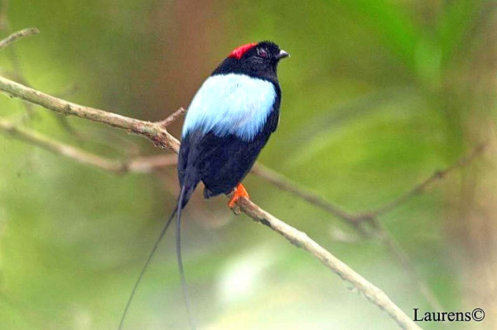 Posada Cerro Escondido – Reservat Mogensen: Birding