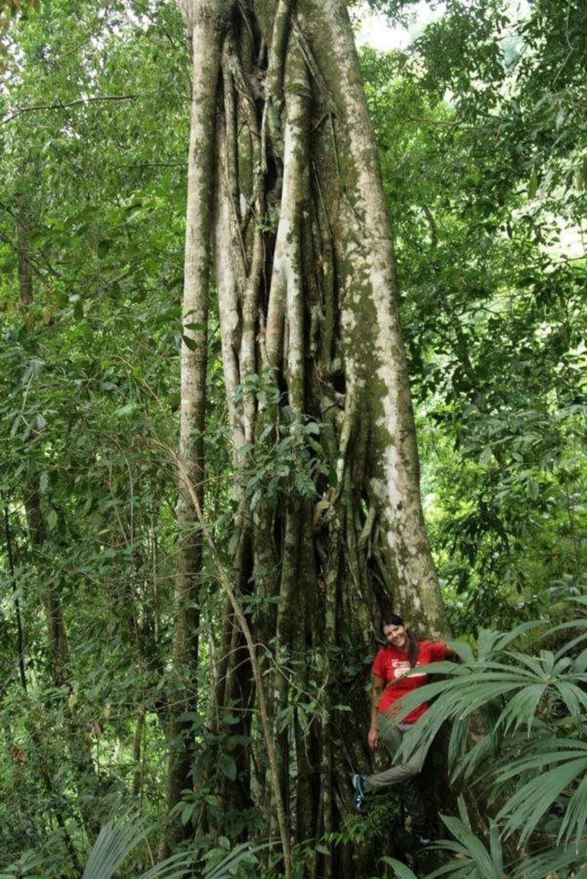 Posada Cerro Escondido – Reservat Mogensen: Urwaldriese