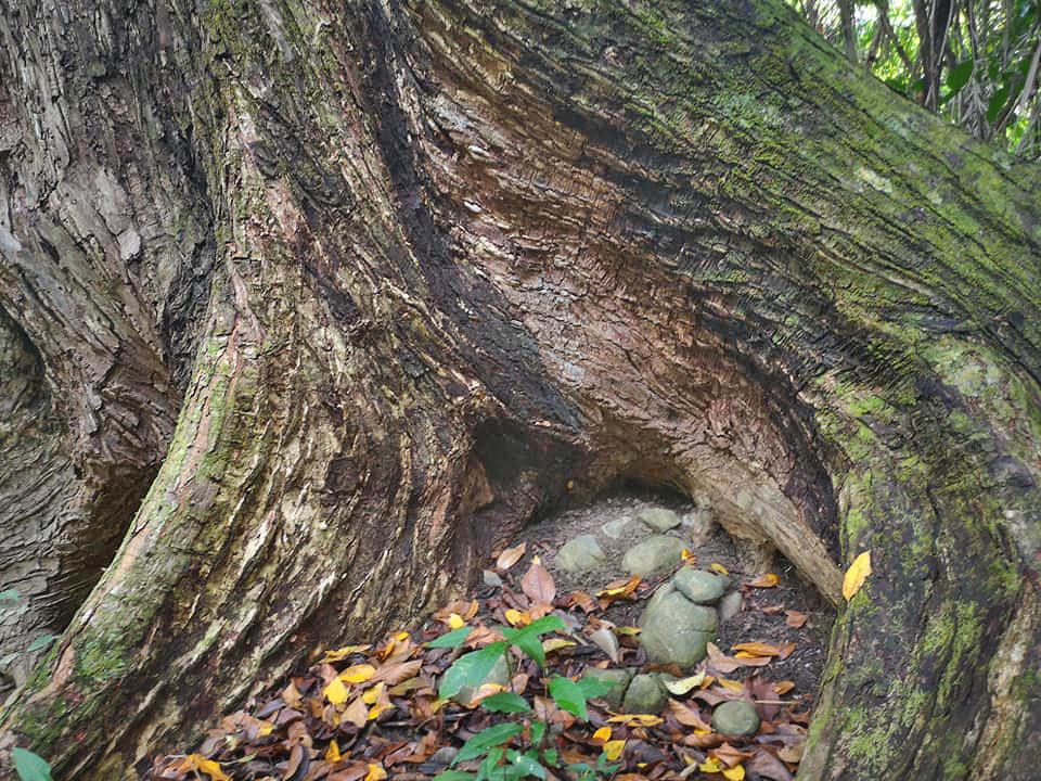 Curú Refugium – Laubwälder