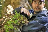 Freicer - Guide in Monteverde Nebelwald Reservat