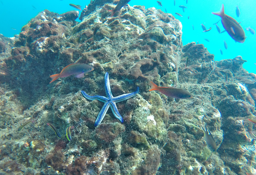 Isla Caño – Tauchen in Costa Rica: Seestern