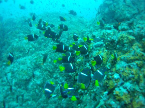 Isla Caño – Tauchen in Costa Rica: kleine Fische