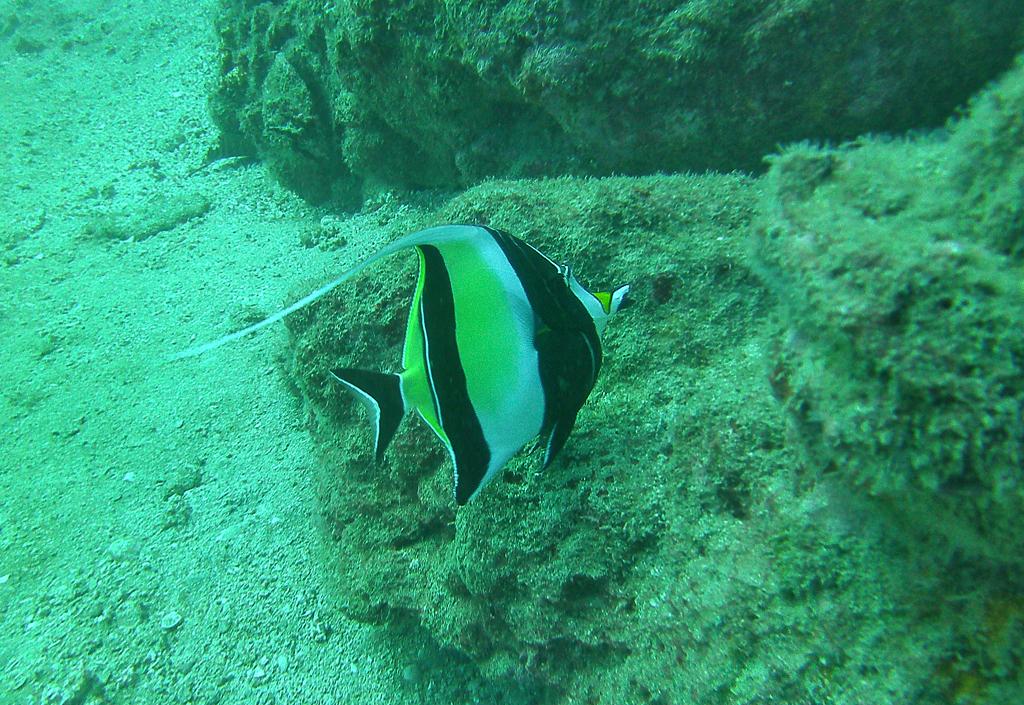 Isla Caño – Tauchen in Costa Rica: ein kleiner Fisch